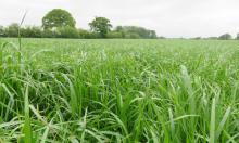 Choosing the right grass species