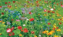 New Masterline 'Colour Boost' flower mixtures add impact to any open space