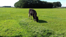 Aim for sward density, winter hardiness and freedom from disease for healthy grass